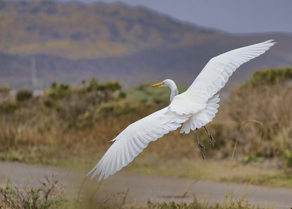 National Wildlife Refuge -Alamosa