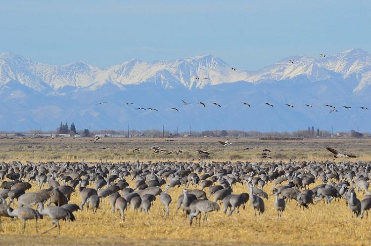 Monte Vista Wildlife Refuge