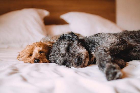 Comfortable & Cozy Bed